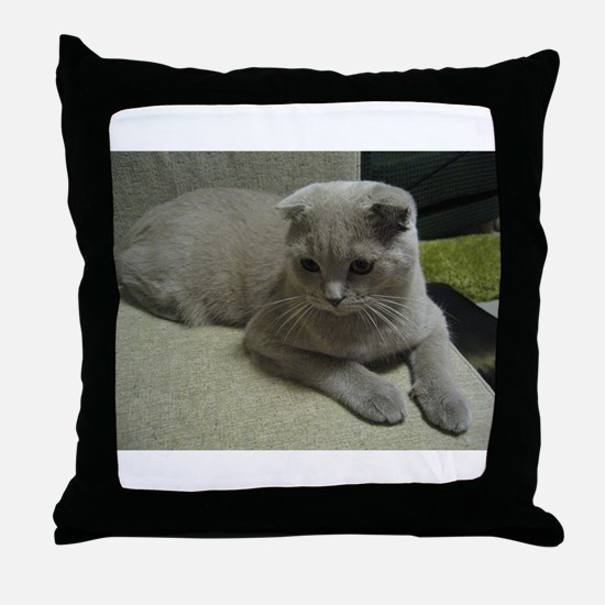 laying 2 scottish fold Throw Pillow