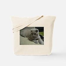 laying 2 scottish fold Tote Bag