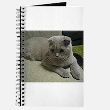 laying 2 scottish fold Journal