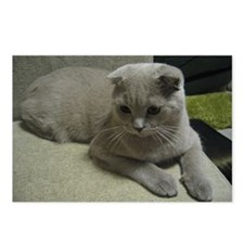 laying 2 scottish fold Postcards (Package of 8)