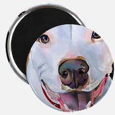 Charlie The Pitbull Dog Portrait Magnets