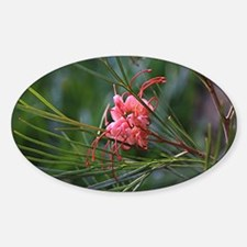 Pink and white grevillea  Sticker (Oval)