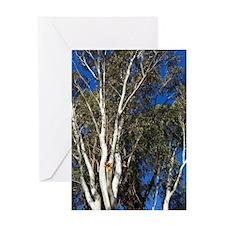 Gum Trees Greeting Card