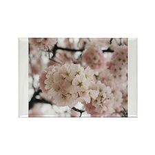 Washington dc cherry blossom Rectangle Magnet