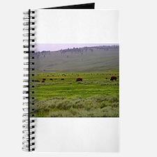 yellowstone national park Journal