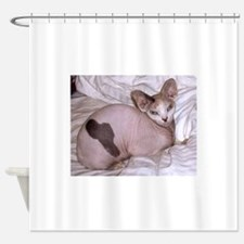 sphynx laying Shower Curtain
