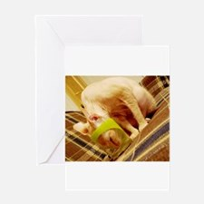sphynx in cup Greeting Cards