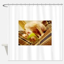 sphynx in cup Shower Curtain