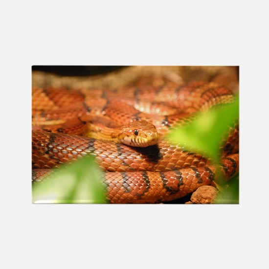 sunkissed corn snake Magnets