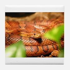 sunkissed corn snake Tile Coaster