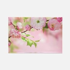 Cherry Blossoms Magnets