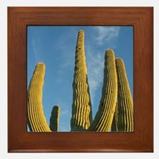 Saguaro National Park v2 Framed Tile