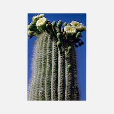 Flowering Saguaro Rectangle Magnet