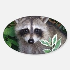 Baby Raccoon Photo Sticker (Oval)