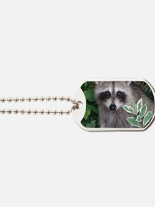 Baby Raccoon Photo Dog Tags