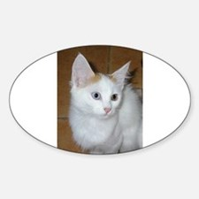 turkish van sitting 3 Decal
