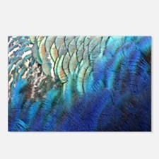 blue and green peacock feathers Postcards (Package