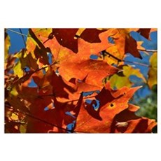 Fall , Nature, Leafs Canvas Art