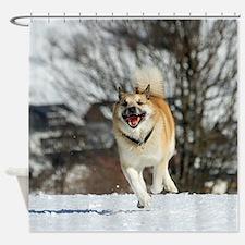 IcelandicSheepdog016 Shower Curtain