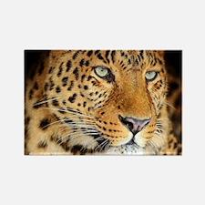 Leopard Portrait Magnets