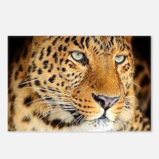 Leopard Portrait Postcards (Package of 8)