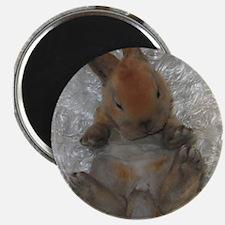 Mini Rex Baby Magnets