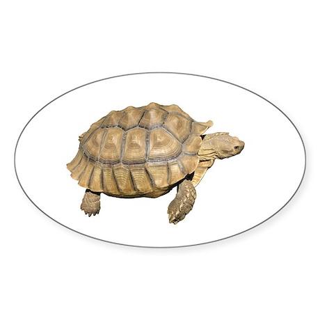 Tortoise Oval Sticker