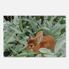Red Mini Rex Postcards (Package of 8)