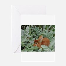 Red Mini Rex Greeting Cards