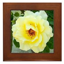 Rose 466-2 Framed Tile