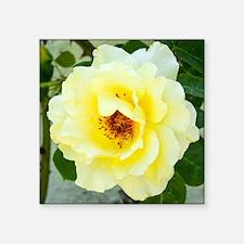 "Rose 466-2 Square Sticker 3"" x 3"""