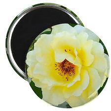 Rose 466-2 Magnet