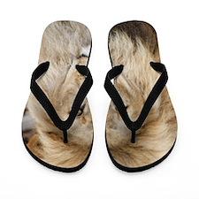 Lion20150802 Flip Flops