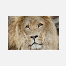 Lion20150802 Magnets