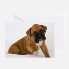 Fawn Boxer Puppy Greeting Cards