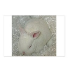 Mini Rex Baby Postcards (Package of 8)