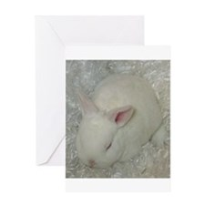 Mini Rex Baby Greeting Cards
