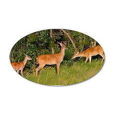 Deer Tryst 22x14 Oval Wall Peel