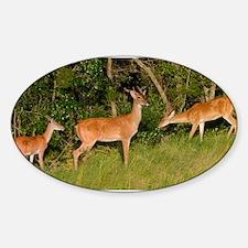 Deer Tryst Sticker (Oval)