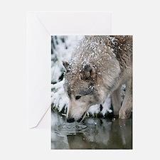 Cute Wolf Greeting Card