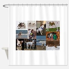 Adventures of Mason & Bosley 1 Shower Curtain