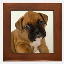 Fawn Boxer Puppy Framed Tile