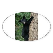 bear cub 2007 Oval Decal
