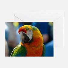 Cute Macaw Greeting Card