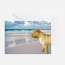 Funny Animals shar pei Greeting Card