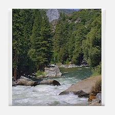 sequoia national park Tile Coaster