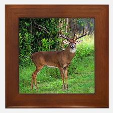 Cute Deer hunting Framed Tile