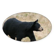 black bear 2007 Oval Decal