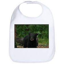 black bear 2007 Bib