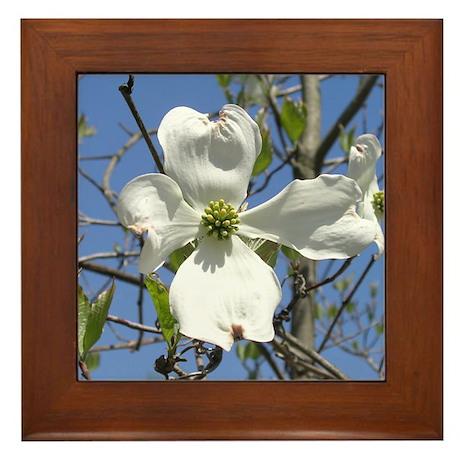 Flowering Dogwood Framed Tile